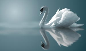 Introspective Swan